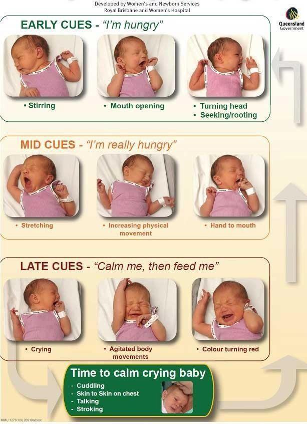 Hunger Cues | Breastfeeding Niagara